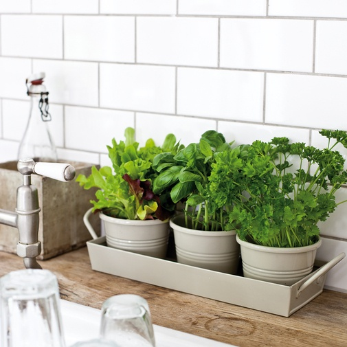 jardin_cocina